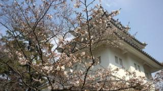 桜 お城公園